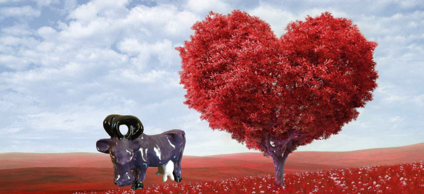 cow and heart