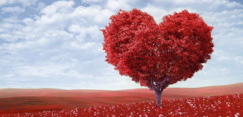 Field of love.